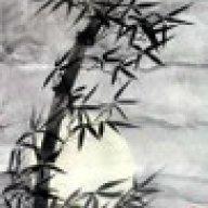 cây trúc xinh