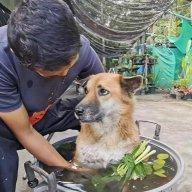 thaihoc