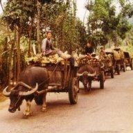 Carabao-cart
