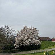 MrKien_Trung