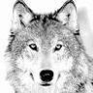 graywolf83
