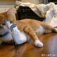 Mèo con ViệtĐức