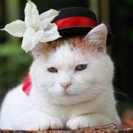 Mèo Béo Ị