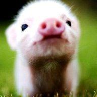 PiggyBoy