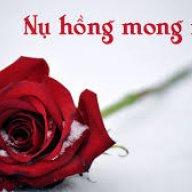 nụ hồng mong manh 1
