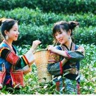 Trà xanh Hàng Châu